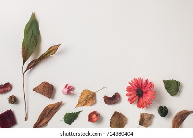 Autumn background: fallen leaves, dry petals, dried flowers and plants on white with copy space for text from top. Top view. Flat lay.