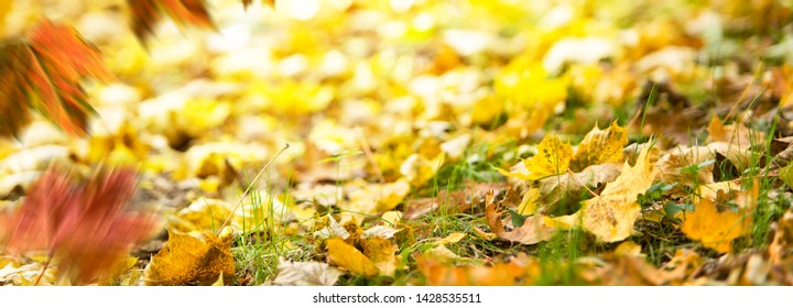 Autumn background. Fallen leaves on the ground in the grass.