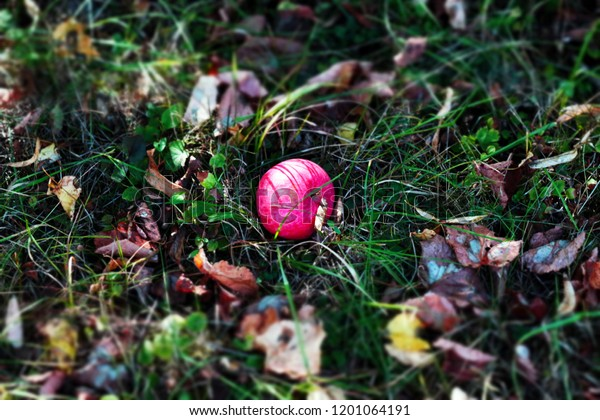 Autumn background - fallen red apple on the november ground in the garden. Fallen fresh red apple in the grass with leaves