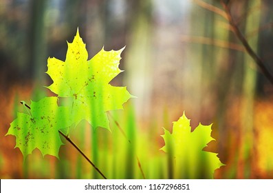 Autumn background with a few yellow leaves