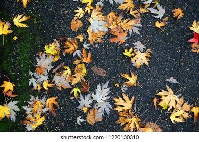 Autumn background: foliage on floor