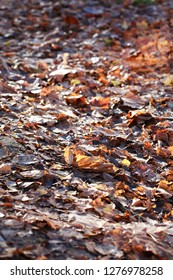 Autumn background. Footpath under falling leaves