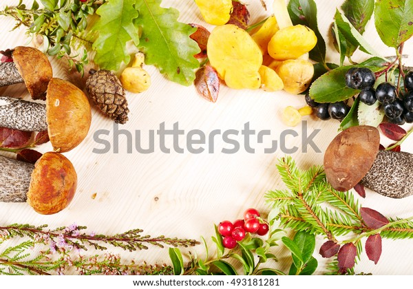 Autumn background with forest mushrooms, herbs, berries and blank space for text