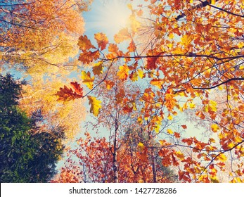 autumn background forest with oak birch maple trees and sunny beams on blue sky