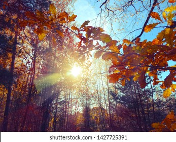 autumn background forest with oak red yellow leaves