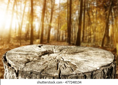 autumn background of forest with tree trunk of free place