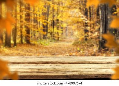 autumn background in golden forest