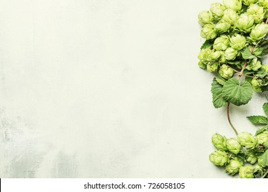 Autumn background with hop cones.top view