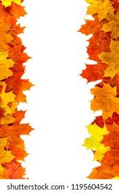 Autumn background. Isolated maple leaves..