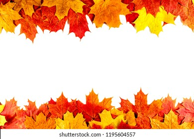 Autumn background. Isolated maple leaves..