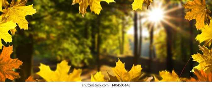 Autumn background. Landscape i the forest in the sunny day.