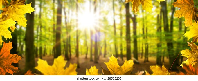 Autumn background. Landscape the forest in the sunny day.
