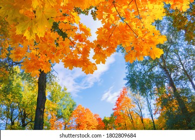 Autumn background landscape. Yellow color tree, red orange foliage in fall forest. Abstract autumn nature beauty scene October season sun heart shape sky Calm season life feel. Fall nature tree leaves