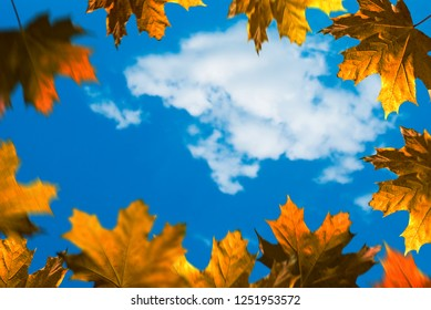 Autumn background. Leaves frame on the blue background