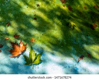 Autumn background with maple leaves and blue background in the sun light