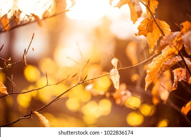 Autumn background. Orange leaves in sunny day