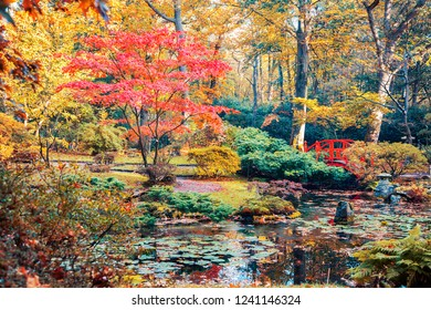 autumn  background panorama in Japanese park, the Netherlands