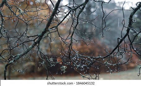autumn background photo gloomy rainy day concept