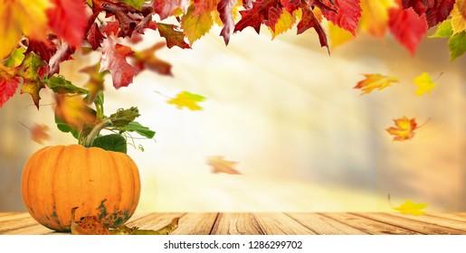 autumn background and pumpkin