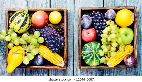 Autumn background with pumpkin, apples,plum and grapes.Autumnal concept