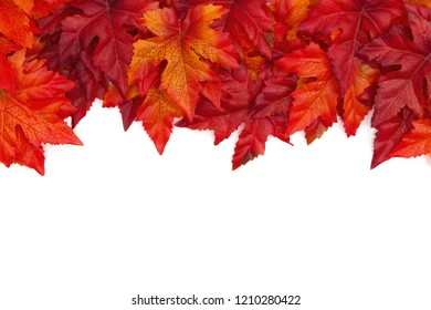 Autumn background with red and orange fall leaves isolated over white with copy space for your message