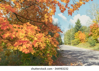 Autumn background. Road. Copy space.