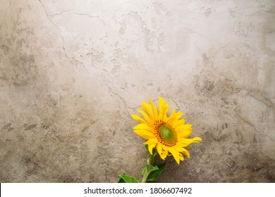 Autumn background with sunflowers and copy space for your design
