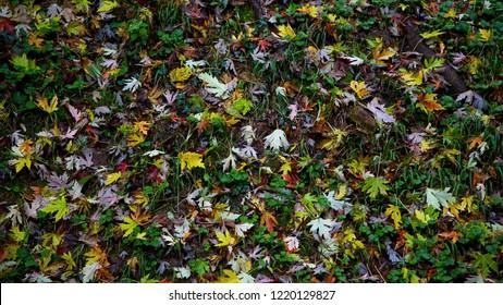 Autumn background: vivid foliage