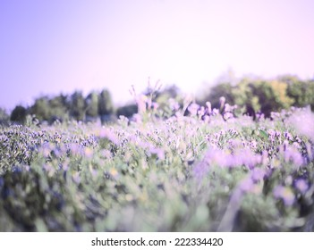 Autumn background - wildflowers on a meadow