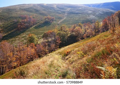 Autumn background in woods. Horizontal view of a clearing, top-side of a mountain in a sunny autumn day.
