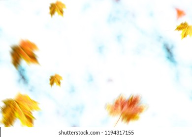 Autumn background. Yellow dry leaves on the light background.