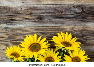 Autumn background with yellow sunflowers on old brown wooden board with copy space