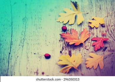 Autumn background/Autumn leaves over wooden background/ Thanksgiving day concept