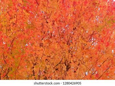 Autumn Backyard Blaze