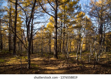 autumn bare trunk forest