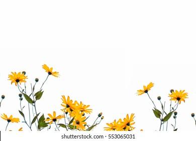 Autumn beautiful colorful dahlia flowers isolated on white background