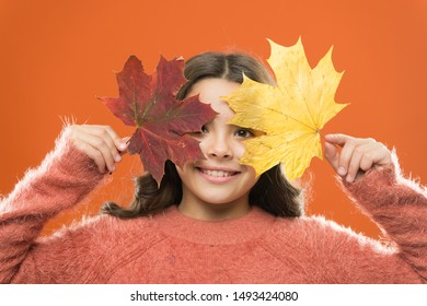 Autumn beauty. autumn kid fashion. Weather change. fall season. fallen leaves. girl child in sweater. Autumn mood. school time. childhood happiness. happy small girl with maple leaf. sweater weather.