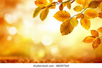 Autumn beech leaves decorate a beautiful nature bokeh background with forest ground