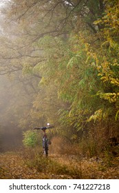 Autumn beech leaves decorate a beautiful nature bokeh background with forest