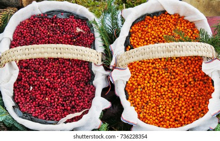 Autumn berries in two baskets. Red lingonberry (Vaccinium vitis-idaea) and yellow sea-buckthorn berries (Hippophae rhamnoides), superfruits.
