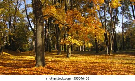 Autumn - Bialystok, Poland - Shutterstock ID 555046408