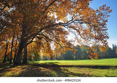 Autumn big tree nature  fall season