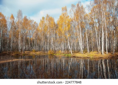 autumn birch forest near a lake on a Sunny day