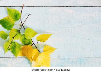 Autumn birch leaf on a blue wooden background