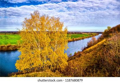 Autumn birch tree at autumn nature river landscape. Autumn birch river view. Autumn nature river birch panorama