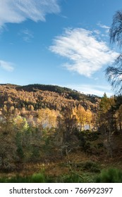 Autumn Birch trees at Loch Pityoulish in the Cairngorms National Park of Scotland.