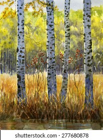 Autumn Birch Trees in Shadow.  Watercolor painting, illustration, of four white birch trees in autumn with shadowed trunks. Fall colored grass and trees.