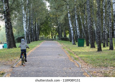 Autumn. Birchwood. A child riding a bicycle.