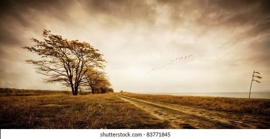 Autumn. Birds of passage. Sepia Toned.