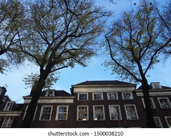 Autumn blue sky, tree with yellow leaves and dutch buildings, The Hague Netherlands, tree lined streets, autumn, blue sky, trees in autumn, architecture and trees